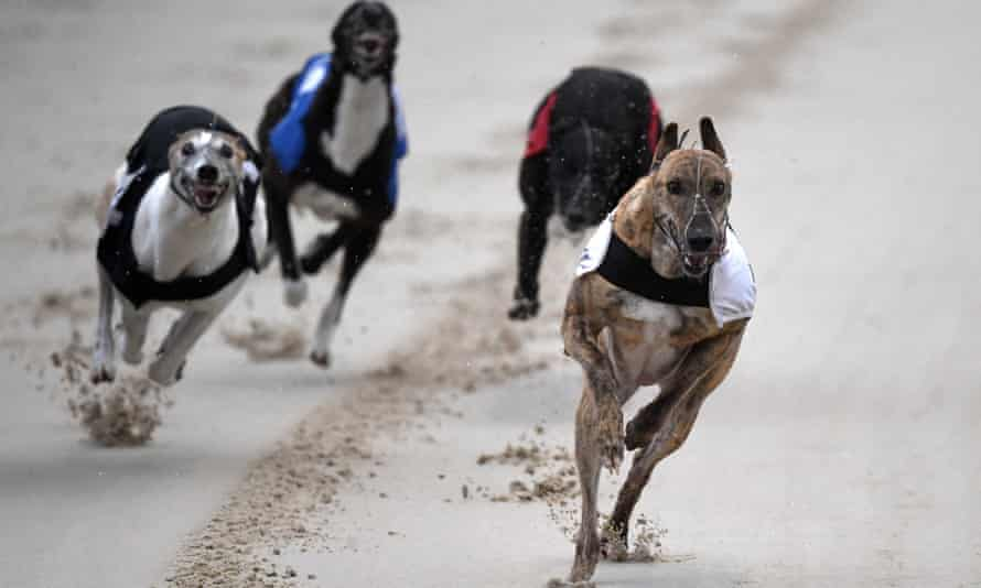 A greyhound race at Romford stadium in east London