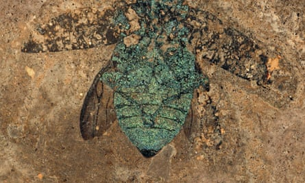 A colourful fossil beetle.