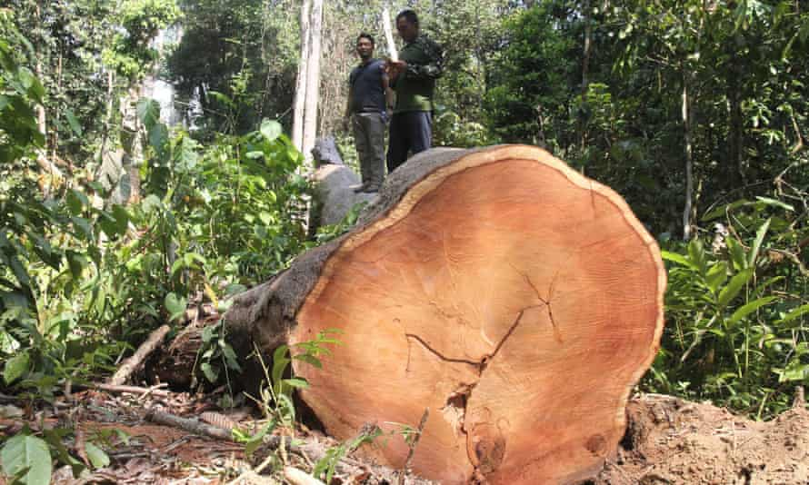 Indonesian policemen conducting an operation to crack down on illegal logging in a forest in East Aceh