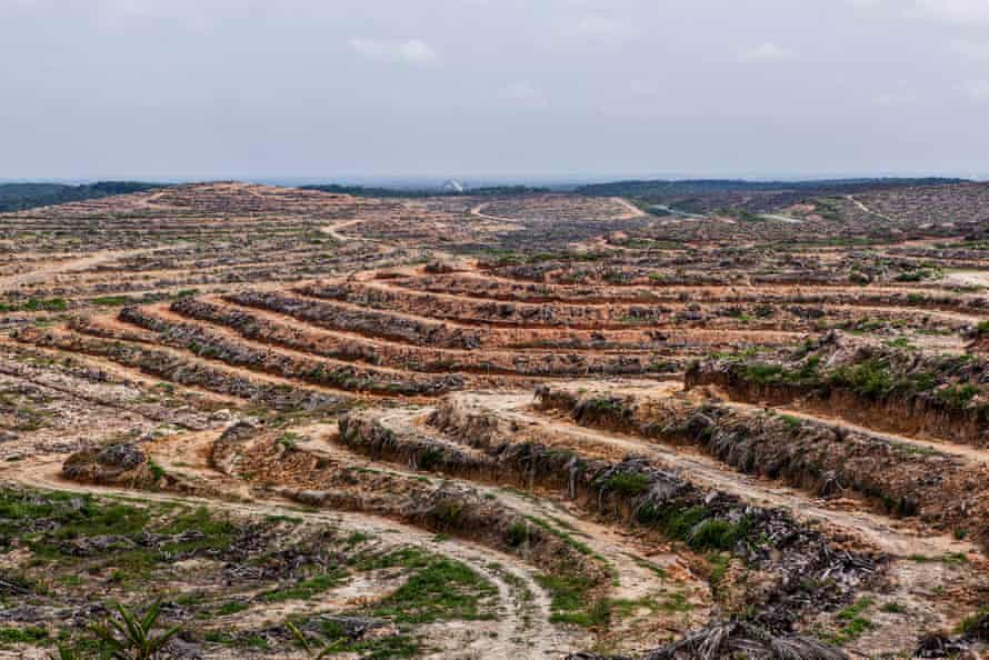 Forest land cleared for palm oil plantation in Sumatra, Indonesia.