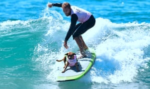 A surfer rides a wave with his dog Giselle