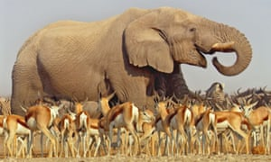 Elephant at a watering hole.