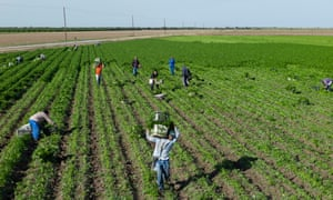 Workers pick parsley in a colonia near the Mexican border. Infrastructure in such settlements is often ramshackle.