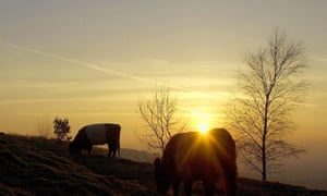 Sunset for pastoral farming? … cows graze at dusk in a field near Gloucester.