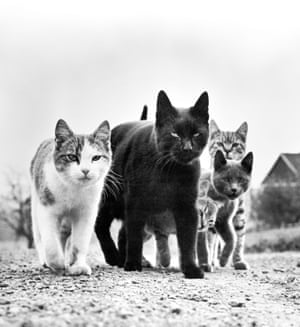 A clowder of ominous looking felines in one of the photographer's most famous works, titled The Mob. New Jersey, 1961.