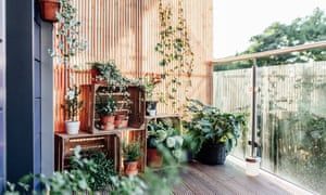 Outdoor plants in balcony.