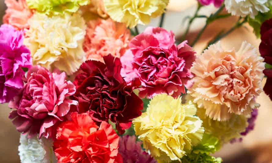 A bouquet of multi-coloured carnations.