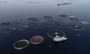 Fish farming in Turkey's Izmir