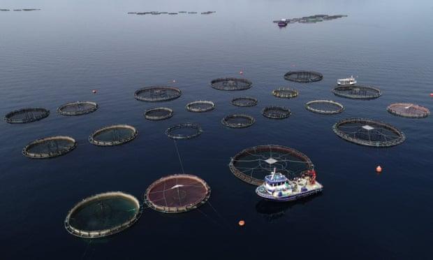 Fish farming in Turkey's Izmir