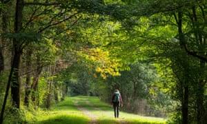 Woman walking through woodland
