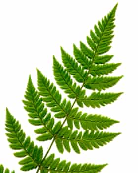 Plants that love very high humidity, such as ferns, will do well in a terrarium.
