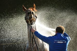 Warrnambool, AustraliaRuler By Choice is hosed down after a race at the the Warrnambool Jumps Carnival
