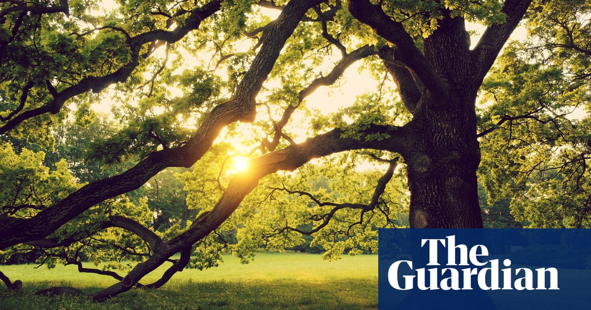 'Every time you commit an antisocial act, push an acorn into the ground': Rebecca Solnit on Orwell's lessons from nature