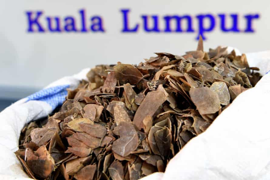 Seized pangolin scales displayed at a press conference at the Malaysian Customs Complex in Sepang. Malaysian authorities seized almost 400 kilograms of pangolins scales trafficked from Ghana for the second time in three days, an official said on June 16.