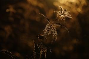 The art of ecology category student winner -  Common Nettle by Sanne Govaert (Ghent University)