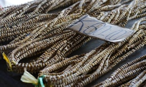 Tradition Tolai shell money, known as tabu, is sold at the Kokopo markets in East New Britain, PNG.