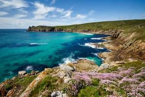 Sea Thrift growing on the clifftop at Nanjizal, Cornwall