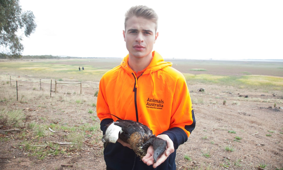 Duck shooting is not a sport, it's government sanctioned slaughter - The Guardian