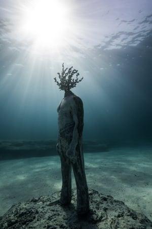 Figure with a tree head.