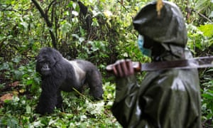 Virunga national park is home to one of the world's largest populations of critically endangered mountain gorillas as well as hundreds of other rare species.