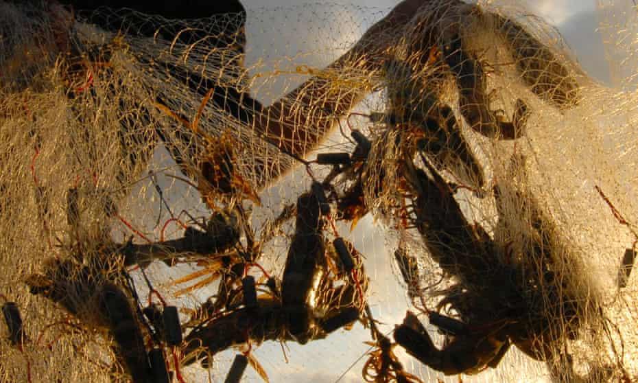 Prawns in a net