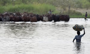 A boy carrying a bundle on his head as a man herds cattle across a section of Lake Chad.