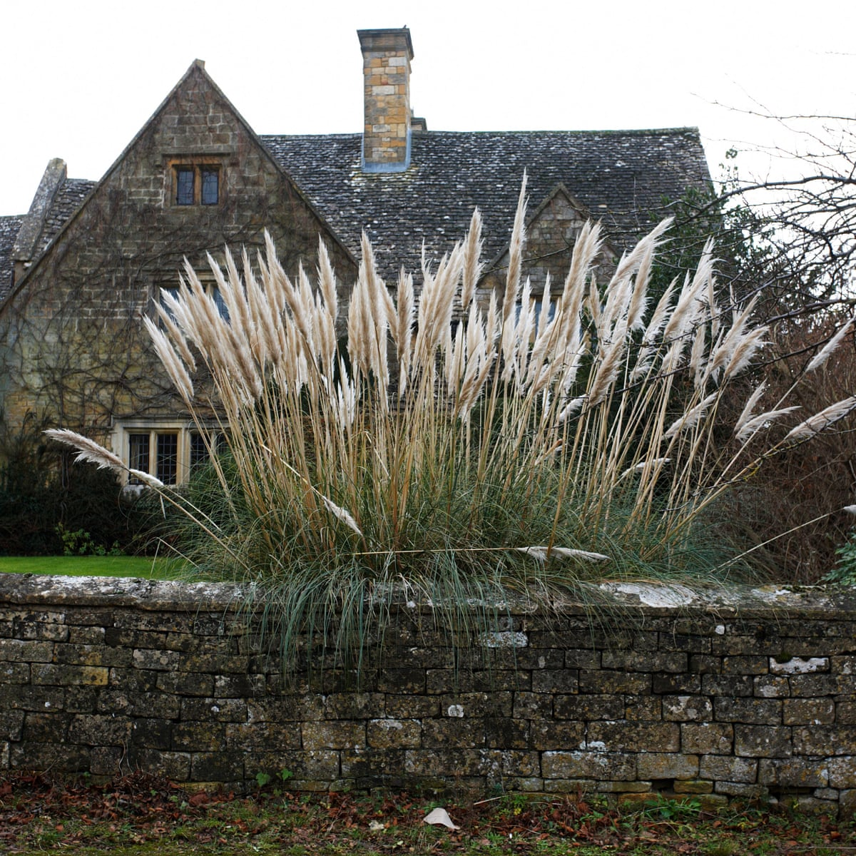 Pampas Grass The Not So Secret Symbol Of Swingers Is A Turn Off Gardens The Guardian