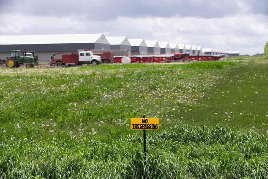 A farm in Iowa hit by the outbreak