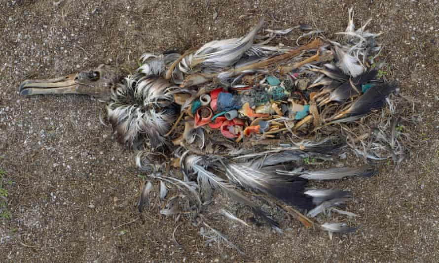 Bird with plastic in its stomach