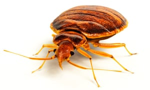The man had apparently complained to the code enforcement office about bedbugs at his former apartment.