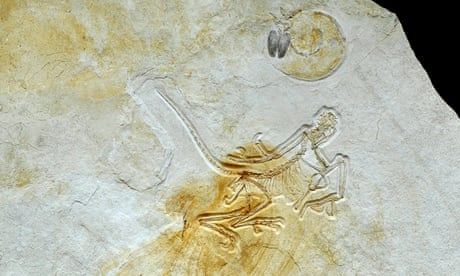 The new specimen forcing a radical rethink of Archaeopteryx