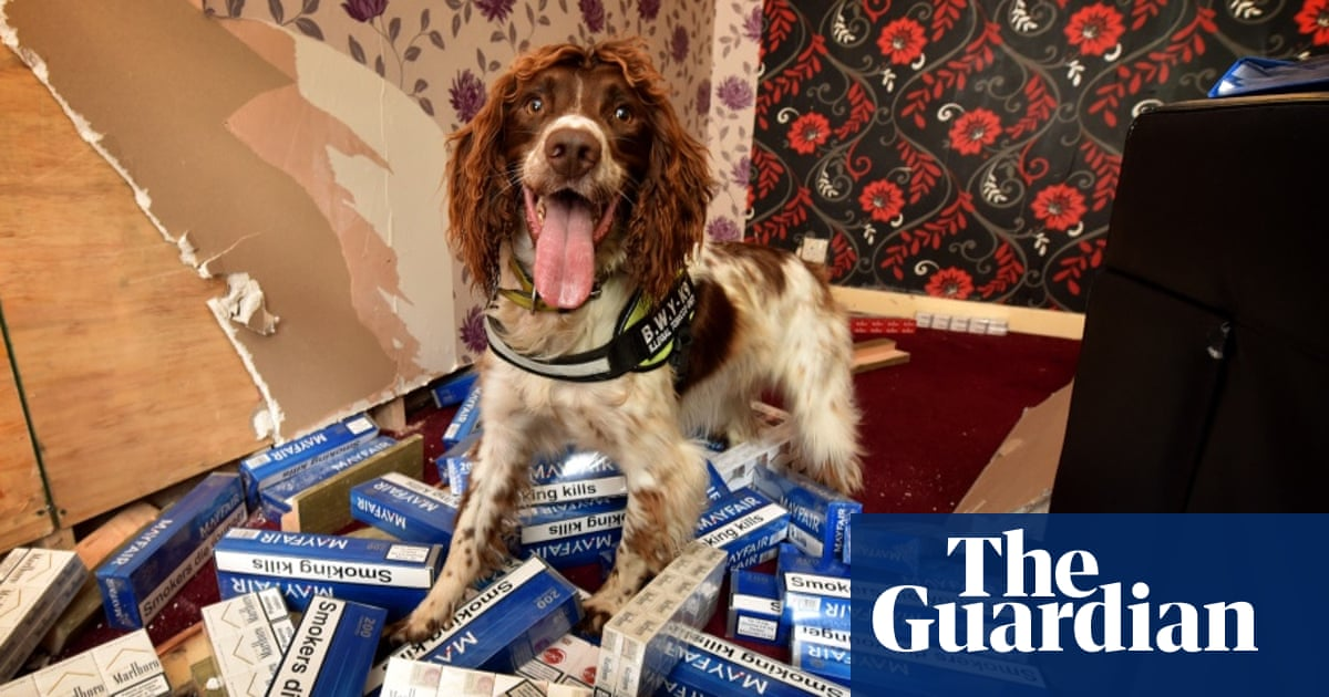 Wanted, playing dead or alive: the sniffer dog with a bounty on his head