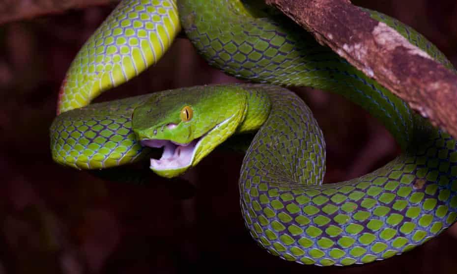 Snake bite (see question 8:8). Photograph: John Sullivan/Alamy