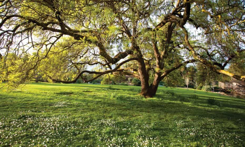 A lush green lawn and tree at the Diggers Foundation's showcase garden in Victoria