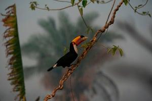 A toucan surveys the destruction.