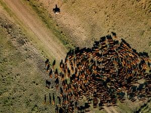 Gauchos herd cattle at Estancia Salinas in north-east Argentina