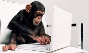 A young chimpanzee with a laptop computer
