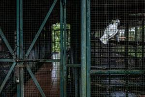 A Cacatua sulphurea at the Wildlife Rescue Centre in Yogyakarta, Indonesia