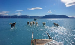 Sled dogs wade through standing water on the sea ice during an expedition in north-western Greenland. Thick ice in the area forms reliably every winter with few fractures for meltwater to drain through. This year saw the onset of very warm conditions in Greenland.
