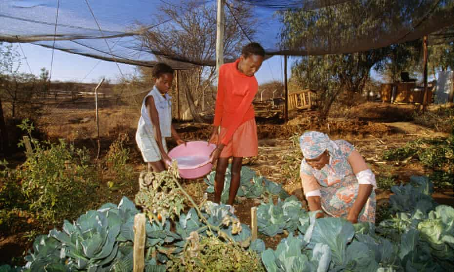 A family waters crops with dishwater in a township in Namibia's capital, Windhoek