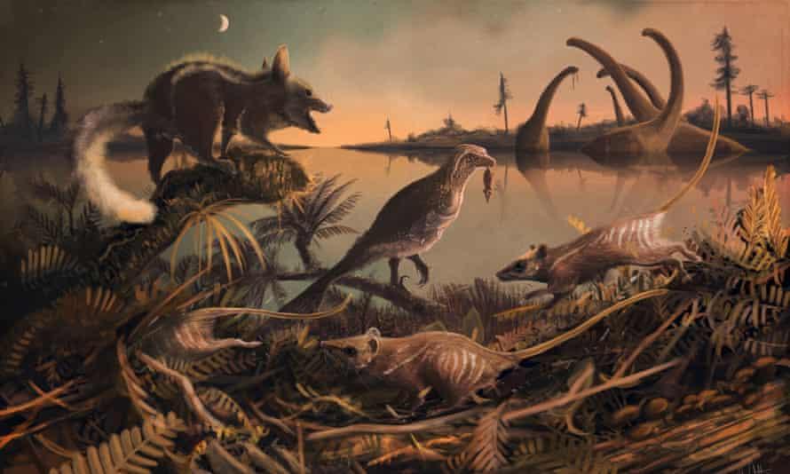 Purbeck mammals, Durlstodon and Durlstotherium. Jurassic Mesozoic mammals that are ancestors to placental mammals.