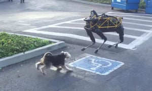 The need to correctly identify dogs is becoming increasingly important to the robot community, as this Boston Dynamics creation is discovering.