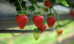 Between March and July the wholesale 'farm gate' price of strawberries rose by 28%.
