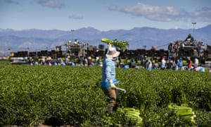 Undocumented workers are heavily represented in many essential sectors in California, such as agriculture.