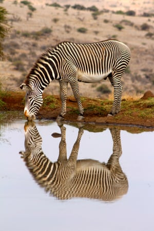 Young Photographer of the Year shortlisted: Stripy reflections by Imogen Smith, age 17