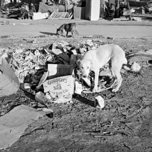 One day in 1986, when photographing in Crossroads, my eyes met those of a white dog slinking around a pile of discarded boxes and rubbish. Soon after that encounter, I came across Ryszard Kapuściński's book Another Day of Life (1976), about the events leading up to Angola's independence and subsequent civil war. I was very struck by that book, the ways it resonated with what was happening in South Africa – in particular, a passage about the dogs in Luanda, abandoned when the Portuguese fled.