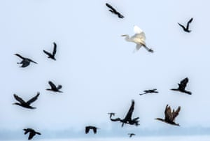 Birds fly over the frozen Dojran lake near the Greek border with Macedonia