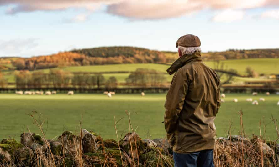 Senior man looking at field with sheep A man with his back to camera wearing a waxed jacket and flat tweed cap looking across a field