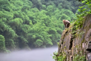 A monkey sits on the cliff in Tongjing scenic spot, a macaque habitat in Chongqing, southwest China