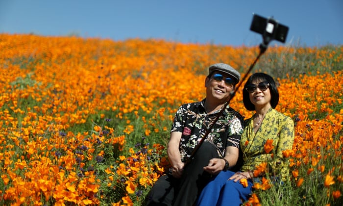 Superbloom or #poppynightmare? Selfie chaos forces canyon